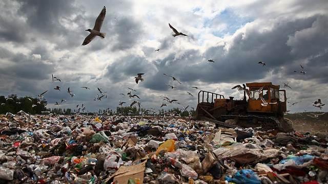 Роспотребнадзор дал рекомендации по частоте вывоза раздельного мусора
