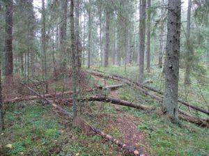 Новое в лесном законодательстве - валежники участковые лесничества